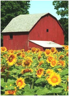 Check out dozens of free plans for small barns. Download any and all directly from the designers' web sites and from US and Canadian government services.