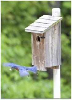 Free Birdhouse, Bird Bath and Bird Feeder Plans - Choose from dozens of free, DIY projects.