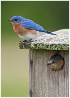 Free Bird House and Bird Feeder Plans - Choose from more than 60 different designs, build it yourself and host beautiful songbirds in your backyard.