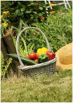 Have a Bountiful Kitchen Garden - Check out dozens of free, do it yourself guides, tips and projects